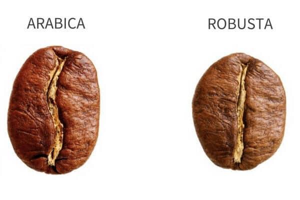 Variedades Arábica y Robusta