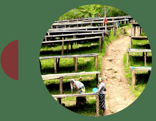 Finca de café en Ruanda Huye Koakaka